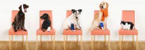 Tierarzt Angebote vergleichen